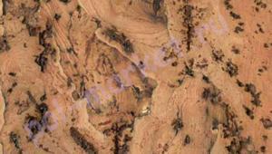 Пробка настенная Corksribas (КорксРибас), Virgen Nat