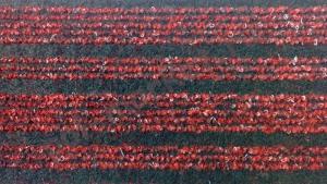 Купить OSTEND на резине (Бельгия) Ковролин Ideal (Идеал), Ostend (Остенд), 716, ширина 4 метра, коммерческий (нарезка)  в Екатеринбурге