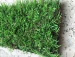 Искусственная трава оптом Ideal Evergreen Grass (2 метра)