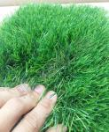 Искусственная трава Pelegrin 50