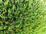 Искусственная трава Deco 35