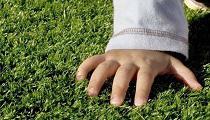 Искусственная трава оптом